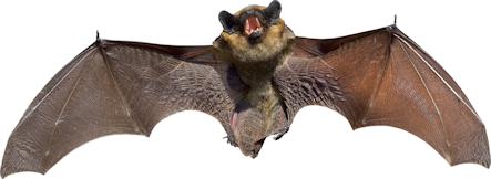 bat30pct